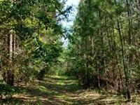 Timberland Investment Great Hunting : Elberton : Elbert County : Georgia