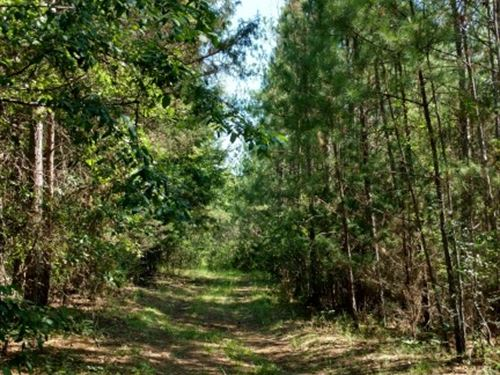 Timberland Investment Great Hunting : Elberton : Elbert County : Georgia