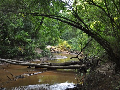 Dixie Wood Tract : Watkinsville : Oconee County : Georgia