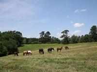 Cherokee County, Ga. 38.9 Acre Farm : Canton : Cherokee County : Georgia