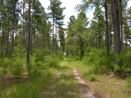143.566 Acres Older Planted Pines : Sylvania : Screven County : Georgia