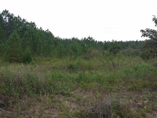 2.5 Acres For Sale In Marianna, Fl : Marianna : Jackson County : Florida