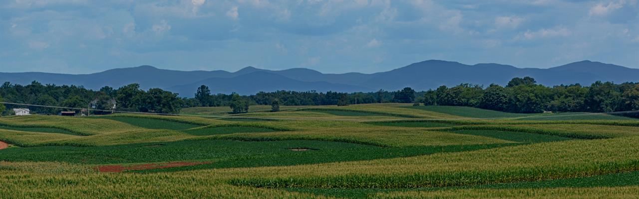Glenwood Farm : Somerset : Madison County : Virginia