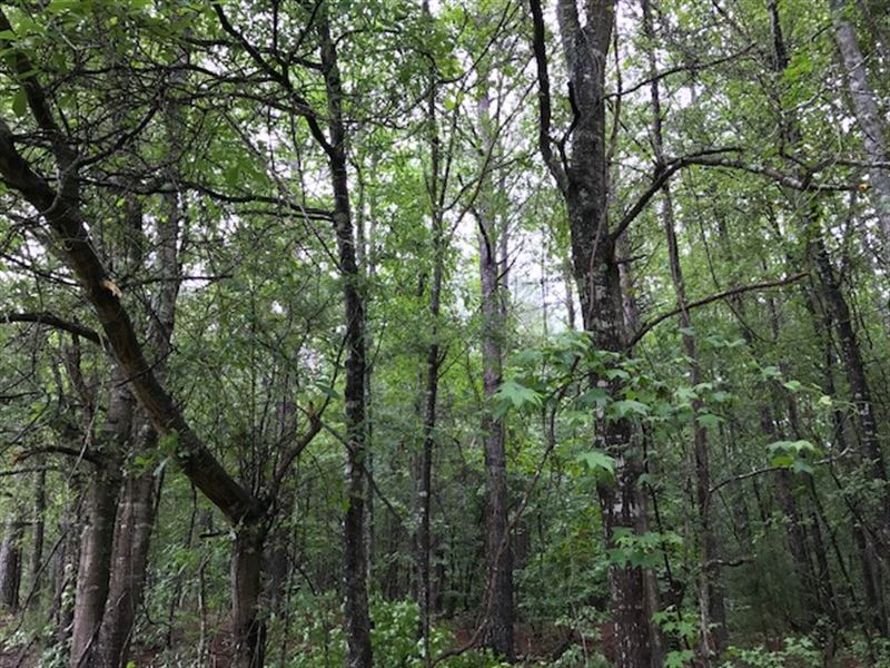 Beautiful Wooded Homesite : Milner : Lamar County : Georgia