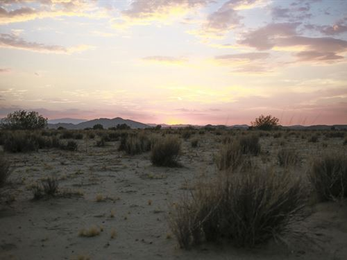 Peace And Quiet In Joshua Tree, Ca : Joshua Tree : San Bernardino County : California
