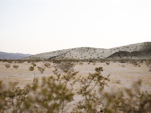 Easy Drive To Joshua Tree National : Joshua Tree : San Bernardino County : California