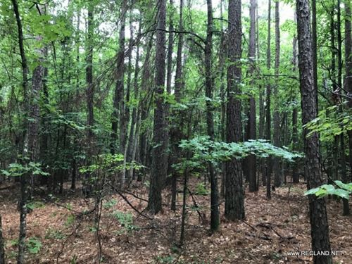 40 Ac - Timberland & Hunting Wi : Pine Bluff : Jefferson County : Arkansas