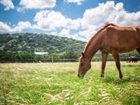 Texas Equestrian Ranch : Kerrville : Kerr County : Texas