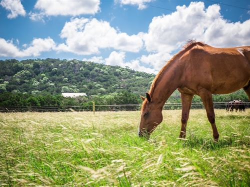 Texas Equestrian Ranch : Kerrville : Kerr County : Texas