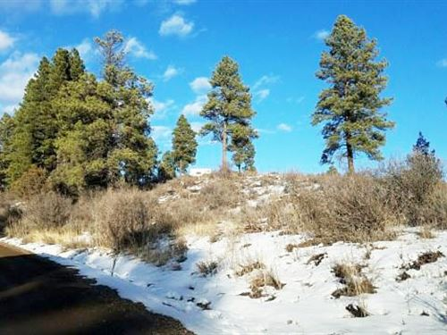 Beautiful Grass, Tree Covered Lot : Pagosa Springs : Archuleta County : Colorado