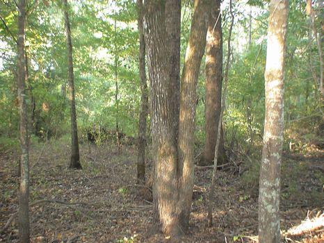 52 Acres Hunting/Timberland : Bartow : Washington County : Georgia