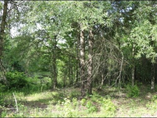 12 Acres In Oktibbeha County : Starkville : Oktibbeha County : Mississippi