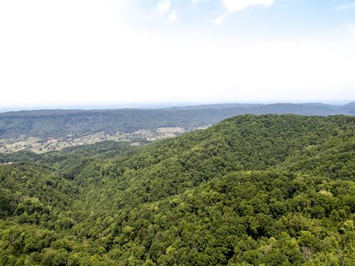 962 Acre Timber Tract With Majestic : Baileytown : Greene County : Tennessee