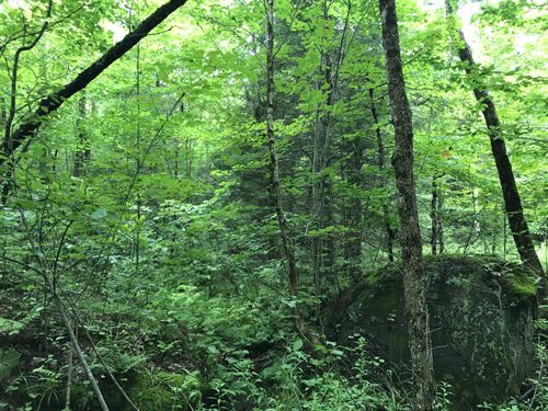 Borders Deer River State Forest : Brandon : Franklin County : New York