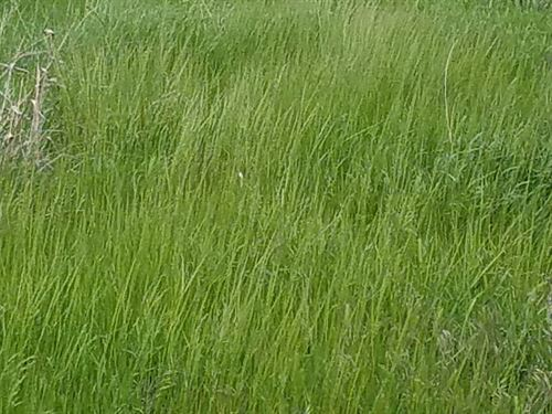 357 Acres Prime Kansas Grassland : Geneseo : Ellsworth County : Kansas