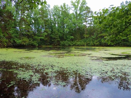 Open Land/Dove Field With 1 Ac, Pon : Elberton : Elbert County : Georgia