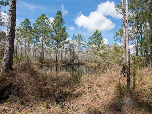 378 Acre Pine Hill Farms Equestrian : Polk City : Polk County : Florida