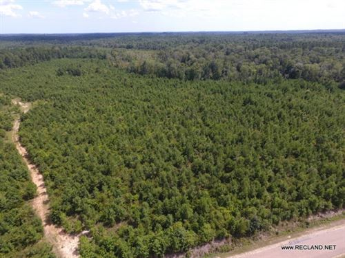 60 Ac - Timberland For Rural Home S : Calhoun : Ouachita Parish : Louisiana