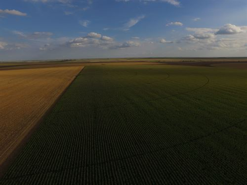 Certified Organic Irrigated Farm - : Marienthal : Wichita County : Kansas