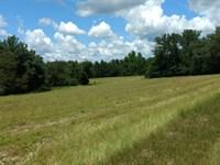 Buttermilk Hills Farm : Sylvania : Screven County : Georgia
