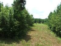Long Branch Farm : Allendale : Allendale County : South Carolina