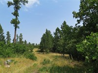 The Elk Trail : Hulett : Crook County : Wyoming