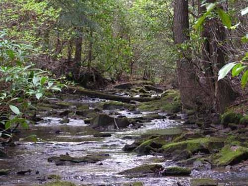 96.57+/-Acres With Year Round Creek : Gruetli Laager : Grundy County : Tennessee