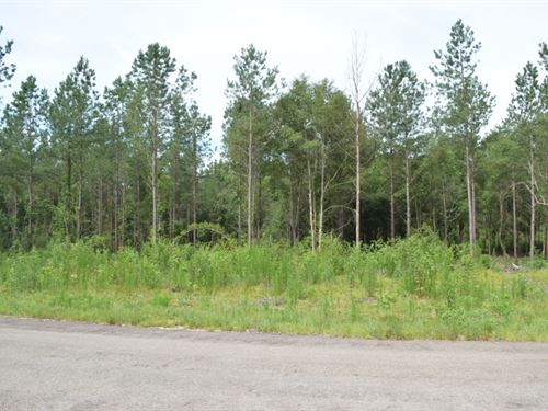 4 Acres In Npsd : Ruth : Pike County : Mississippi