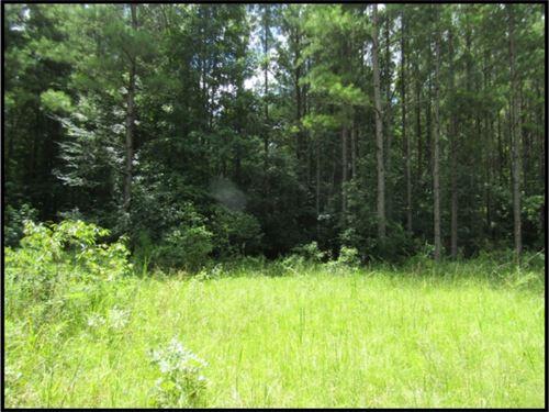 370 Acres In Jasper County : Rose Hill : Jasper County : Mississippi
