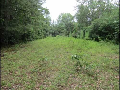 60 Acres In Pearl River County : Poplarville : Pearl River County : Mississippi