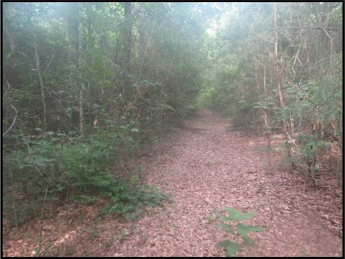 27 Acres In Harrison County : Lizana : Harrison County : Mississippi