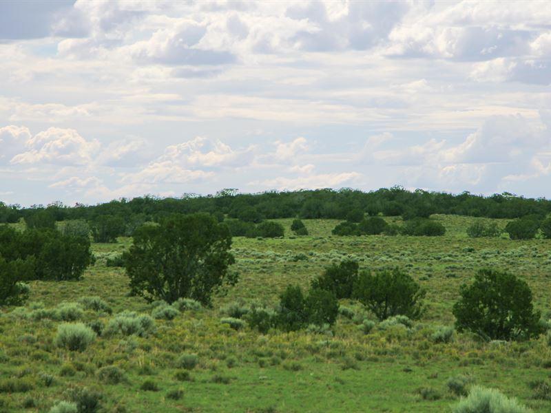 Cool Northern Az Ranch $273 Month : Saint Johns : Apache County : Arizona