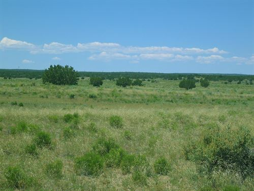 36 Acre Northern Az Sufficieny Land : Saint Johns : Apache County : Arizona