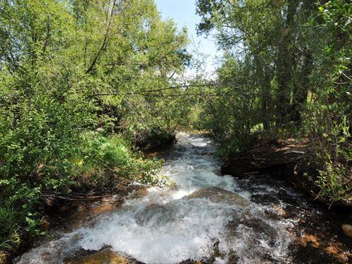 Beautiful Browns Creek Frontage : Nathrop : Chaffee County : Colorado
