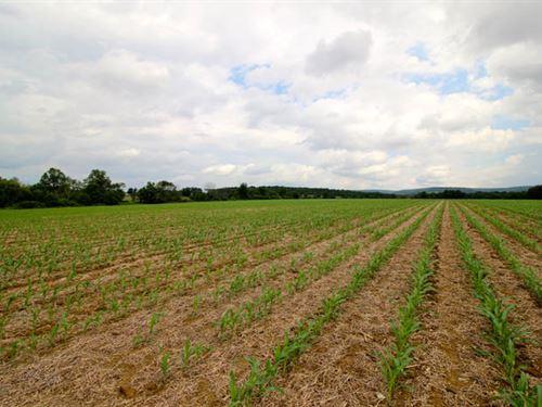 54+/- Acres Prime Farmland : Bloomsburg : Columbia County : Pennsylvania