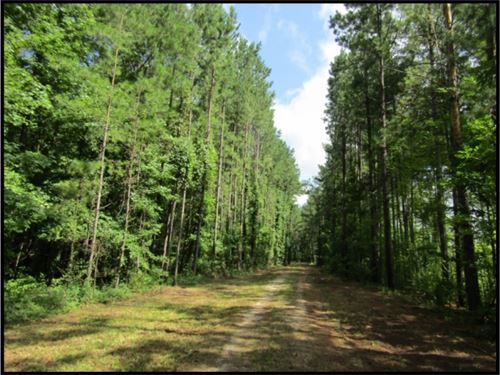 883 Acres In Jasper County : Baxter : Jasper County : Mississippi