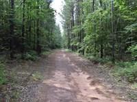 Beautiful Pine Timberland Plus : Hayneville : Houston County : Georgia