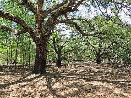 Madison I-10 Timber Tract : Madison : Florida