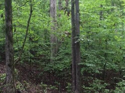 Jasper County 44.88 : Monticello : Jasper County : Georgia