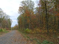 Owner Financed, Wooded, Mountain : Dunlap : Sequatchie County : Tennessee
