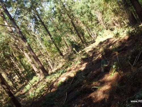 40 Ac - Hunting & Timberland : Creston : Natchitoches Parish : Louisiana