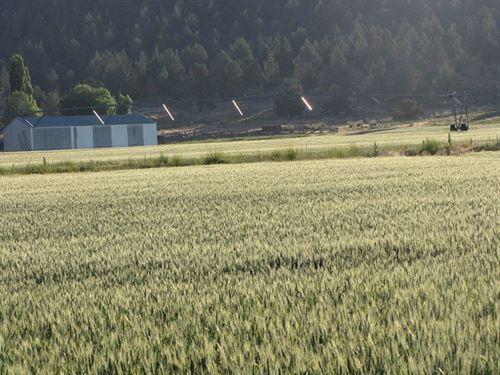 Irrigated Hillside Farm : Bonanza : Klamath County : Oregon