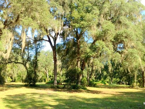 3 Acre Lot - Oak Hill In Citra : Citra : Marion County : Florida