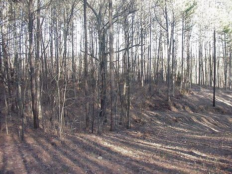 20 Acres Sand Mountain : Gadsden : Etowah County : Alabama