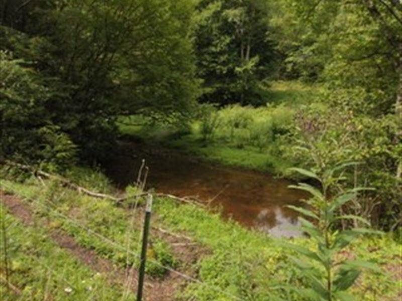 Acreage On Horse Creek : Whitetop : Grayson County : Virginia