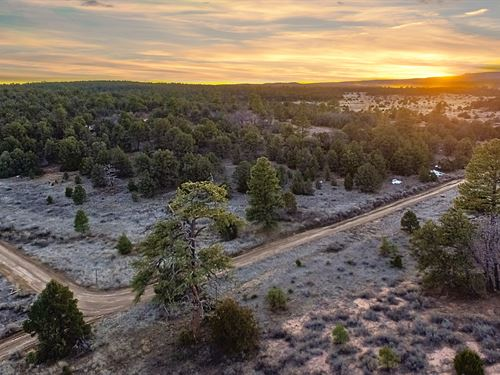 Wooded Corner Lot Near Utilities : Ramah : Cibola County : New Mexico