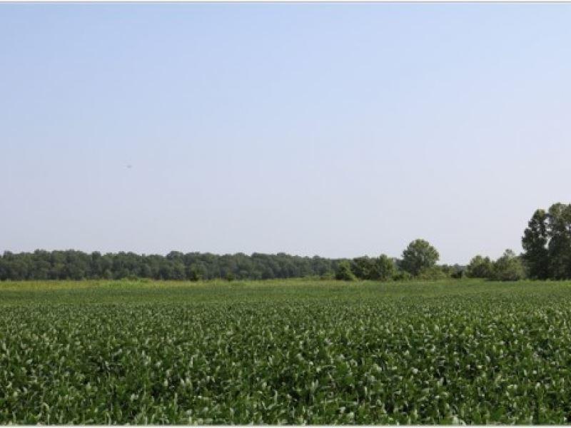 260 Acres In Yazoo County : Yazoo : Yazoo County : Mississippi
