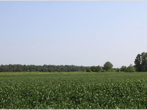260 Acres In Yazoo County : Yazoo : Mississippi