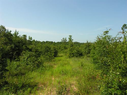 249 Acres Wooded : Preston : Webster County : Georgia