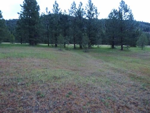 Affordable 40 Acres Western Montana : Superior : Mineral County : Montana